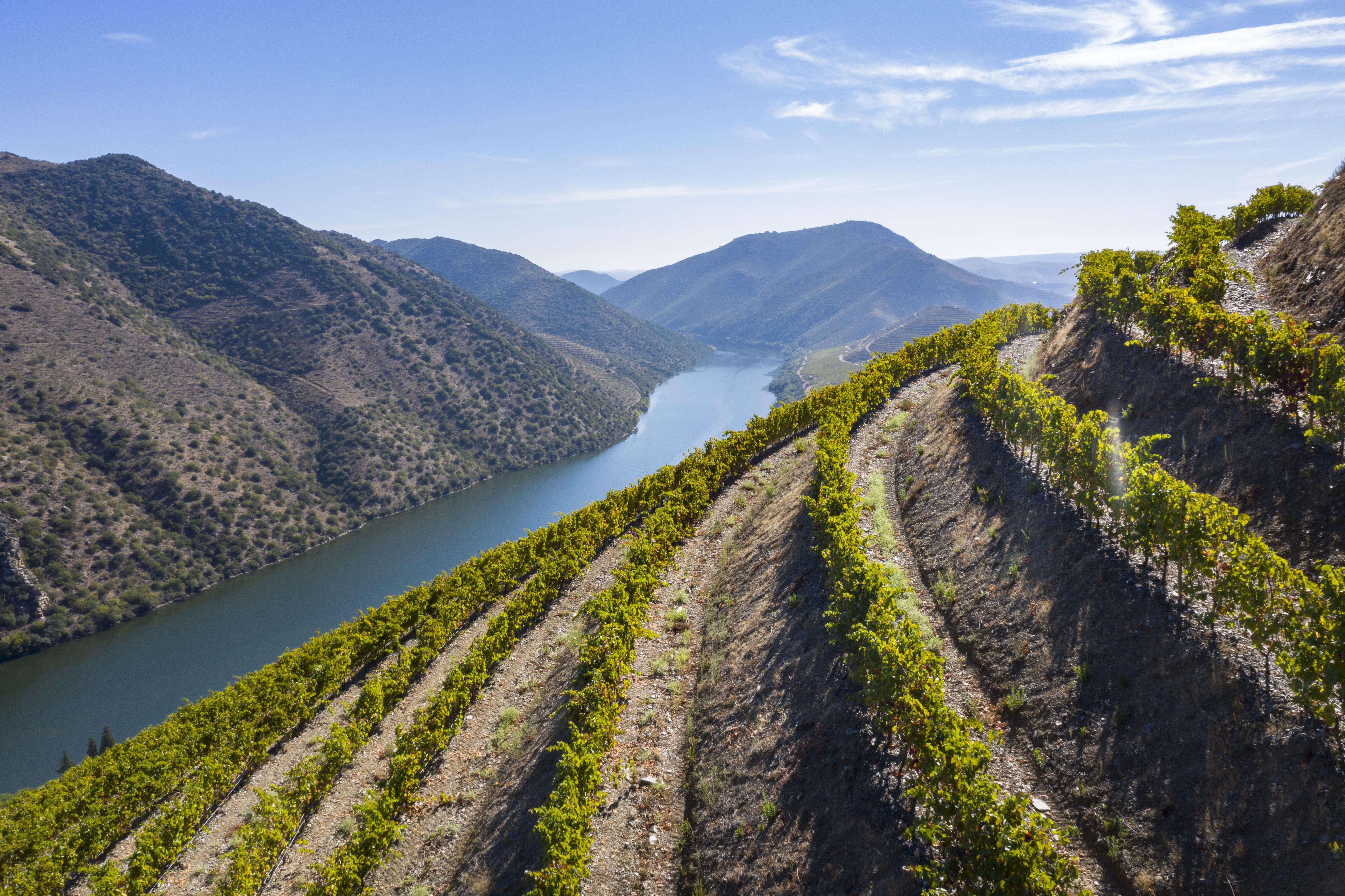 Douro Wines 1