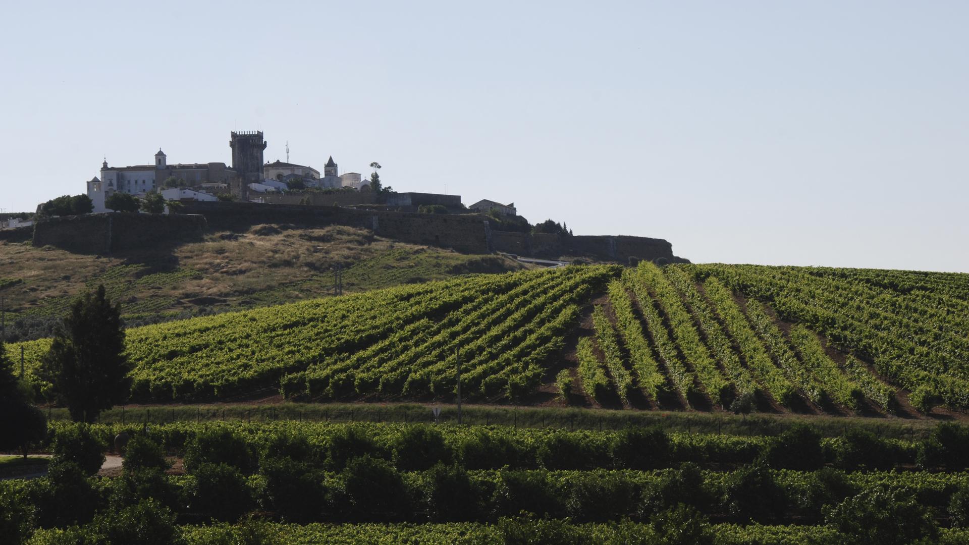 Alentejo Wines 1