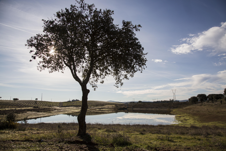 Barragem Adega Vila Santa