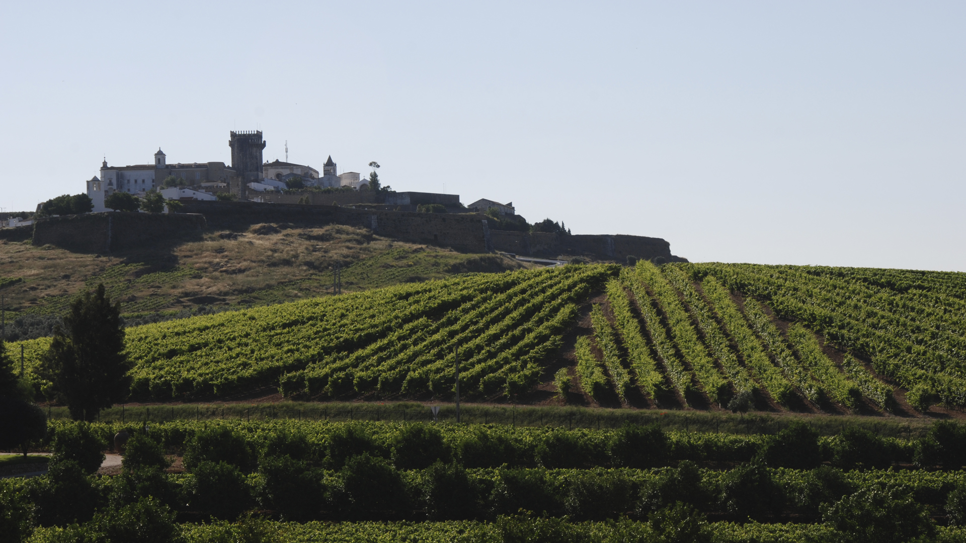 Estremoz Castle's Vineyard