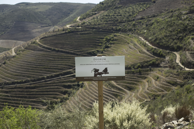 Preservação do Chasco Preto